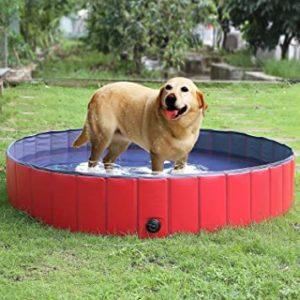 Migliori Piscine per Cani